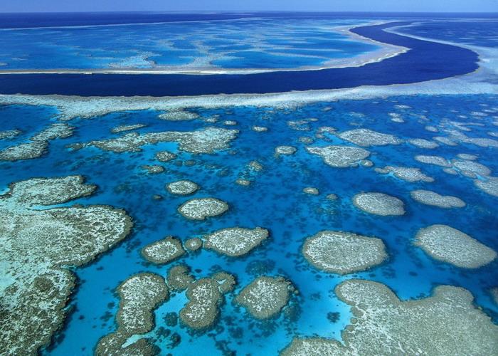 Коралловые рифы располагаются вдоль